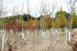 Saplings in the Heart of England Forest - Dennis Maps